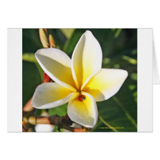 Lady Bug with Plumeria greeting card