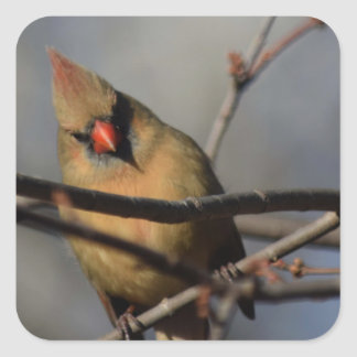 Lady Cardinal behind the limbs Square Sticker
