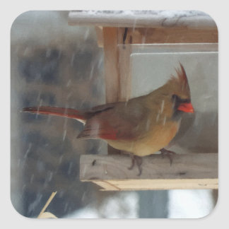 Lady Cardinal Painting Square Sticker