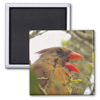 Lady Cardinal's Song Maganet 2 Inch Square Magnet