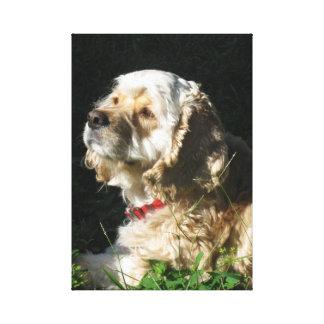 Lady, Cocker Spaniel, Canvas Art Stretched Canvas Prints