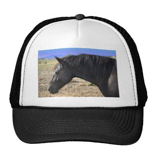 Lady Friesian Mare with Colorado Sky Trucker Hat