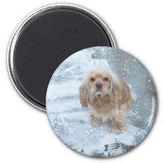 Lady Jane my dog Fridge Magnet