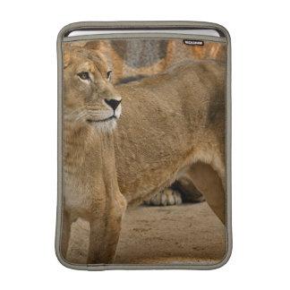 "Lady Lioness  13"" MacBook Sleeve"