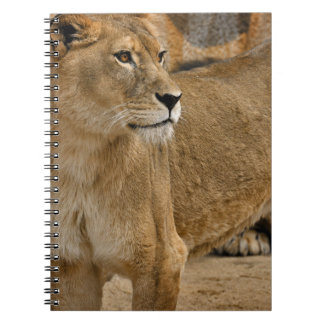 Lady Lioness Notebook