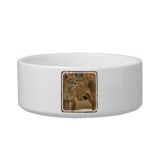 Lady Lioness  Pet Bowl Cat Bowls