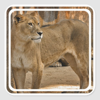 Lady Lioness Sticker