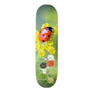 lady on top skateboard deck