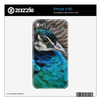 Lady Peacock Zazzle Skin iPhone 4 Decals