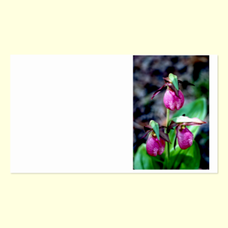 Lady Slipper I, Pink Green Garden Delight Double-Sided Standard Business Cards (Pack Of 100)