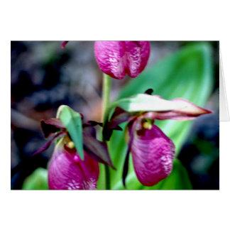 Lady Slipper I, Pink Green Garden Delight Cards