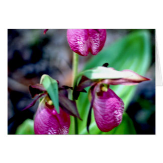 Lady Slipper I, Pink Green Garden Delight Greeting Card