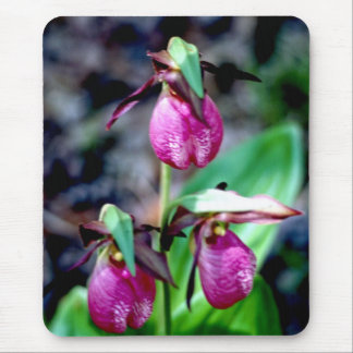 Lady Slipper I, Pink Green Garden Delight Mouse Pad