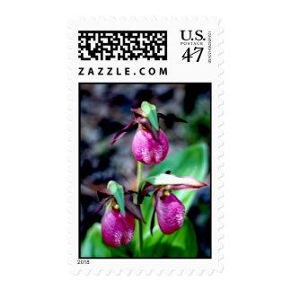 Lady Slipper I, Pink Green Garden Delight Postage Stamp