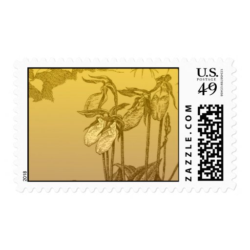 Lady slipper orchids stamp
