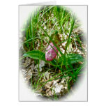 Lady Slipper Wild Orchid Card