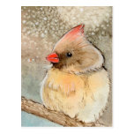 Lady Winter Cardinal Postcard
