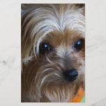 "Lady Yorkshire Terrier<br><div class=""desc"">This is a cute little Yorkshire Terrier or Yorkie,  a wonderful little friendly loving companion.</div>"