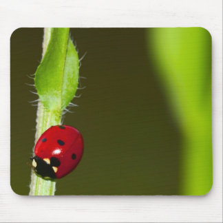 Ladybeetle mousepad