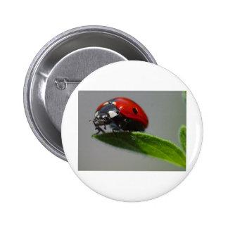 Ladybird 2 Inch Round Button