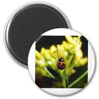 ladybird 2 inch round magnet
