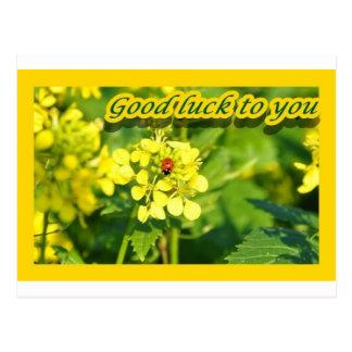 Ladybird Beetle Marienkäfer Good luck Viel Glück Postcard