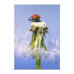 Ladybird breath flower canvas gallery wrapped canvas