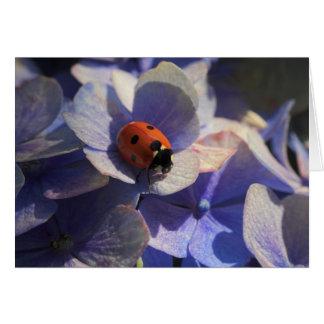 Ladybird Cards