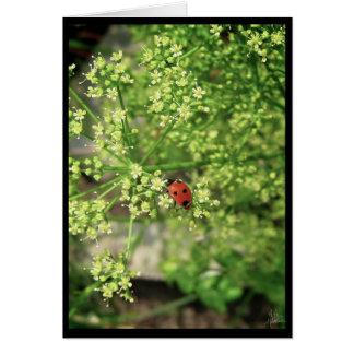 Ladybird [Greeting Card]