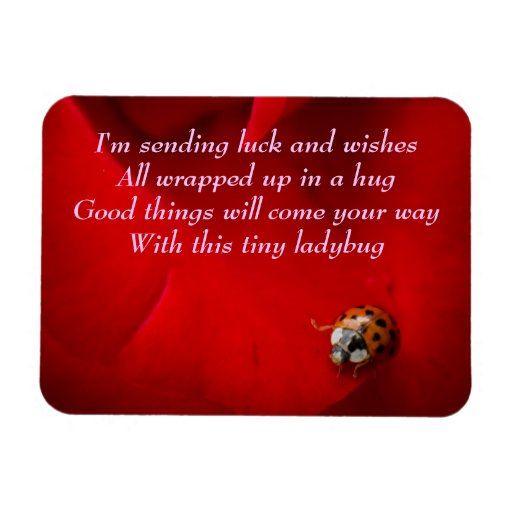 Ladybird in Red Rose Ladybug Hug Rectangle Magnets