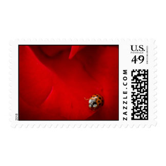 Ladybird in Red Rose Stamp