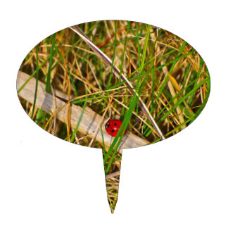 Ladybird in the grass picture cake toppers