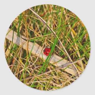 Ladybird in the grass picture classic round sticker