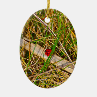 Ladybird in the grass picture Double-Sided oval ceramic christmas ornament