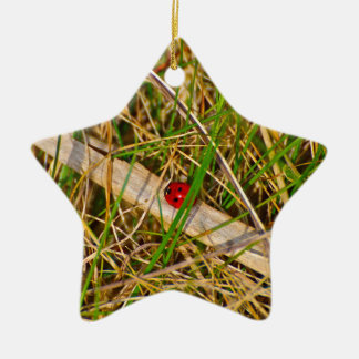 Ladybird in the grass picture Double-Sided star ceramic christmas ornament