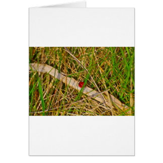 Ladybird in the grass picture greeting card