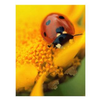 Ladybird,