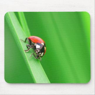 Ladybird Mousepads