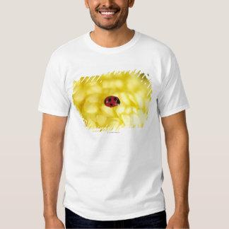Ladybird on a yellow chrysanthemum tee shirt