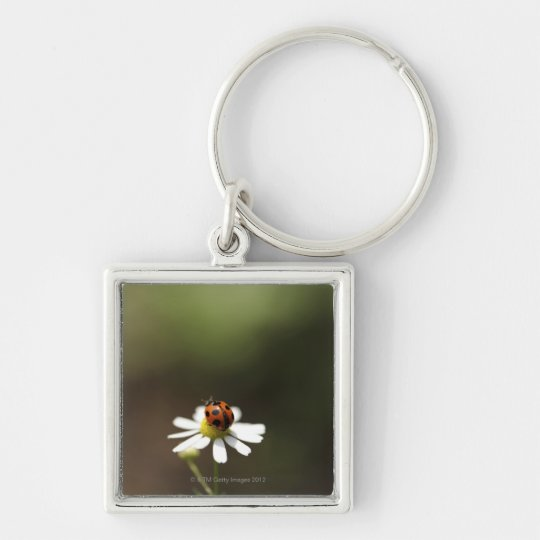 Ladybird on Chamomile Flower Keychain