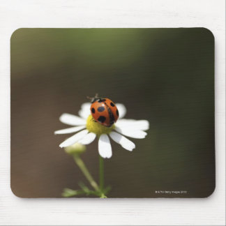 Ladybird on Chamomile Flower Mouse Pad