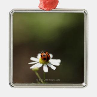 Ladybird on Chamomile Flower Christmas Tree Ornaments