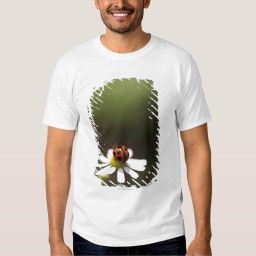 Ladybird on Chamomile Flower Shirt