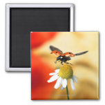ladybird on flower 2 2 inch square magnet