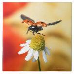 ladybird on flower 2 large square tile