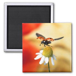 ladybird on flower 2 fridge magnet