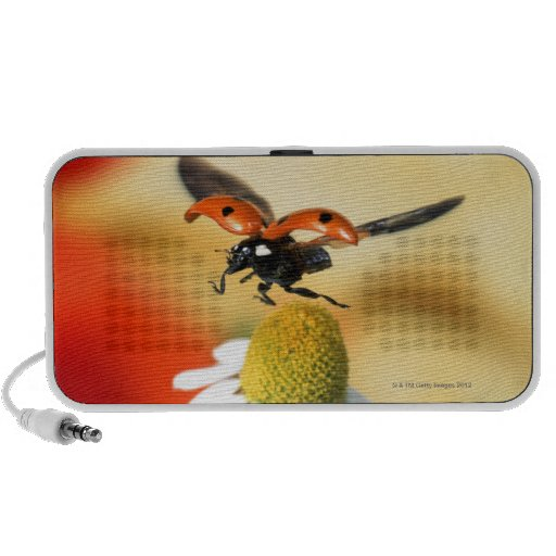 ladybird on flower 2 notebook speaker