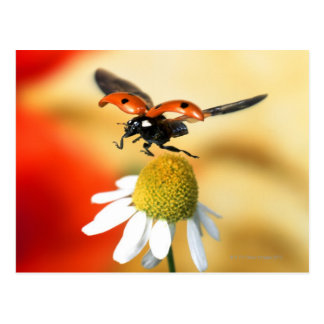 ladybird on flower 2 postcard