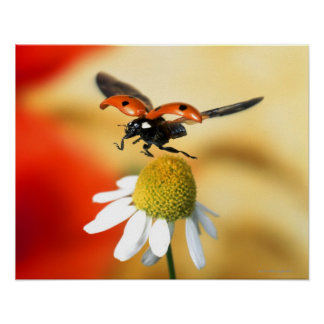 ladybird on flower 2 print