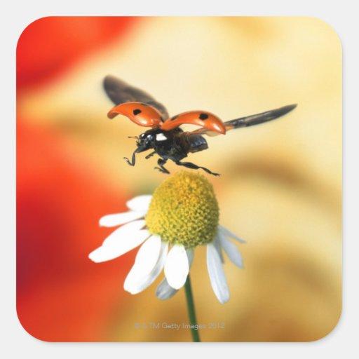 ladybird on flower 2 square sticker